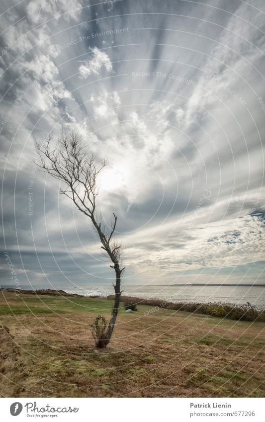 Sky Nature Plant Sun Tree Ocean Landscape Clouds Winter Environment Autumn Spring Air Weather Waves Wind