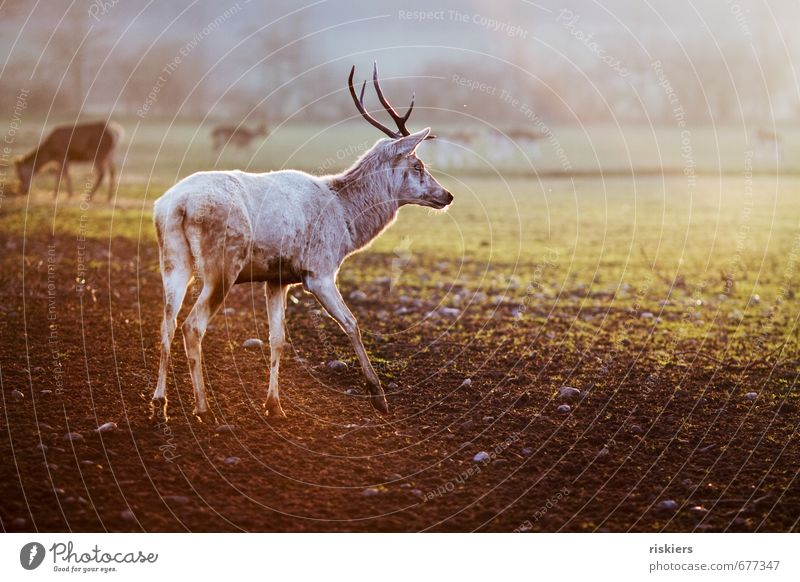 Nature Animal Environment Meadow Autumn Spring Exceptional Going Field Elegant Wild animal Esthetic Beautiful weather Observe Deer Herd