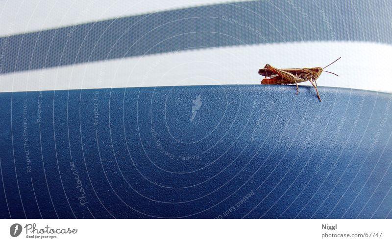 White Blue Style Insect Stripe Salto Locust Backrest