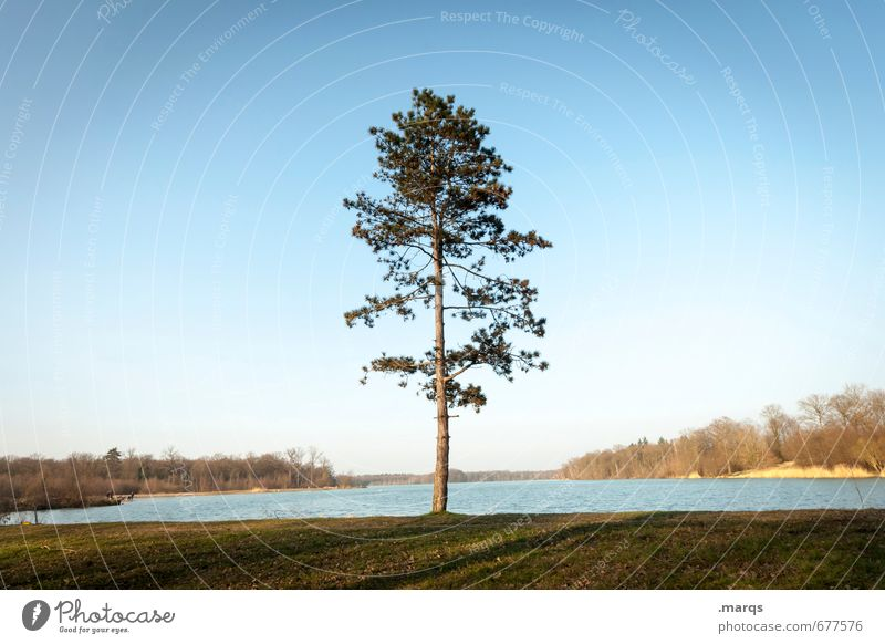 Nature Summer Tree Relaxation Landscape Environment Meadow Spring Horizon Leisure and hobbies Growth Idyll Climate Trip Beautiful weather Elements