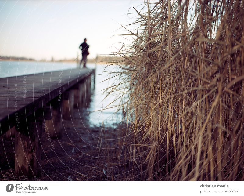 Human being Water Far-off places Lake Common Reed Footbridge Bavaria Depth of field Lake Chiemsee