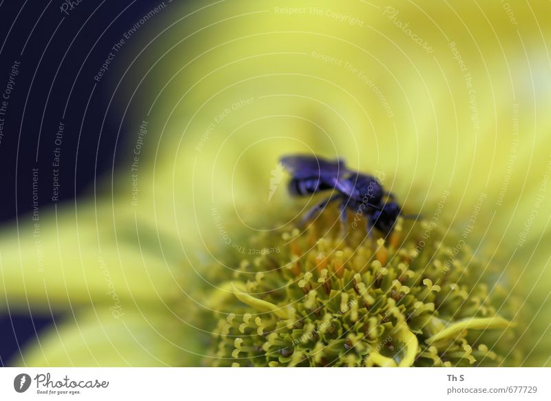 wasp Environment Nature Plant Spring Blossom Animal Wild animal Bee 1 Blossoming Fragrance To feed Esthetic Near Natural Beautiful Joie de vivre (Vitality)