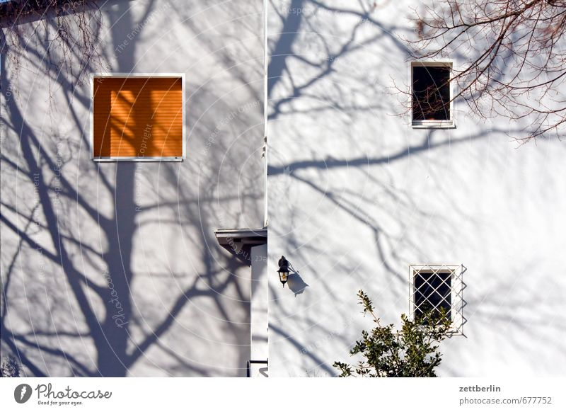 Tree (shadow) Spring Garden House (Residential Structure) Apartment Building Architecture Facade Window Tree trunk Branch Twig Shadow Residential area