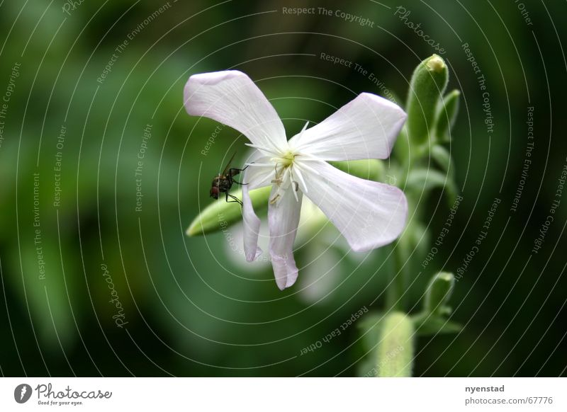 Nature Flower Green Plant Relaxation Garden Freedom Park Fly Insect