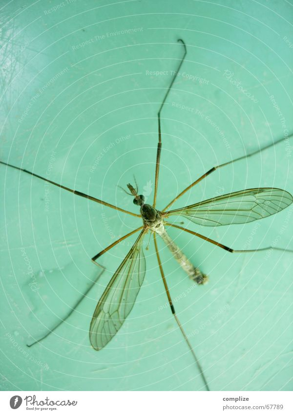 Nature Blue Green Animal Eyes Life Legs Feet Flying Fear Wing Living thing Hind quarters Insect Turquoise