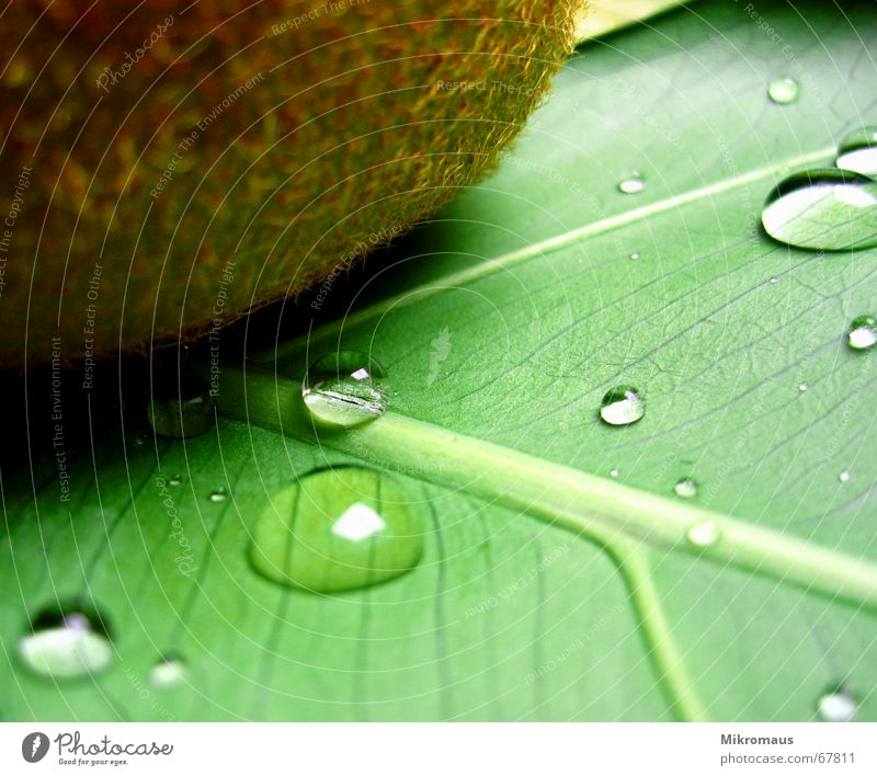 Plant Green Water Leaf Healthy Food Rain Fruit Nutrition Drops of water Drinking water Wet Wellness Vessel Rachis