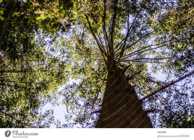 crown Adventure Hiking Agriculture Forestry Nature Sky Spring Summer Beautiful weather Tree Leaf Wood Breathe Dream Growth Natural Above Under Blue Green
