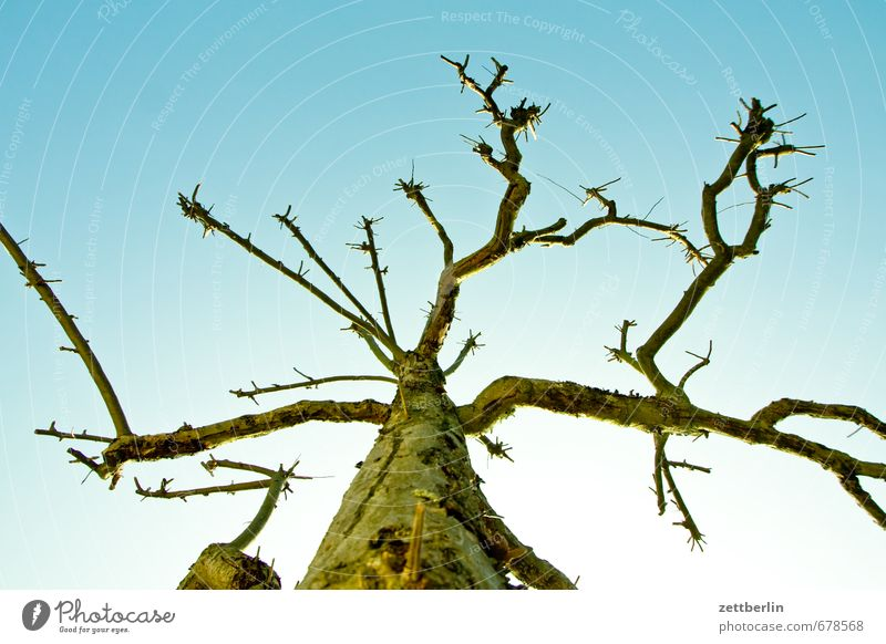 Tree (Apple) Spring Garden Sky Garden plot Garden allotments Landscape Light Nature Sun wallroth Tree trunk Branch Twig Cloudless sky Branched Interlaced