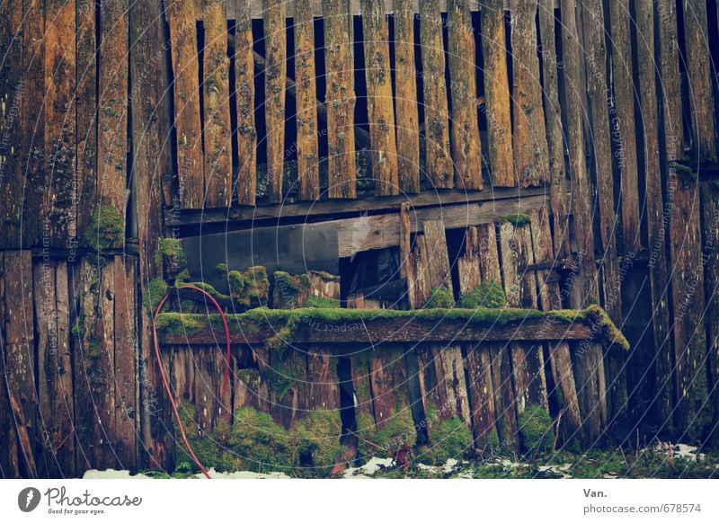live better Moss Hut Ruin Barn Wood Old Brown Derelict Wooden board Hose Colour photo Subdued colour Exterior shot Detail Deserted Day