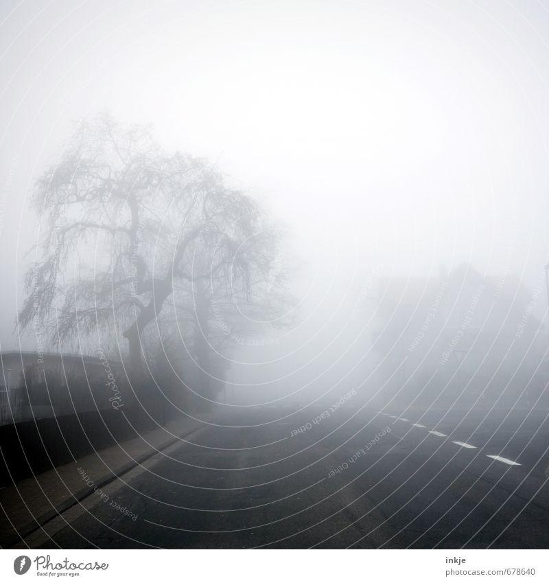 City Tree Winter Dark Environment Street Emotions Autumn Lanes & trails Moody Air Fear Fog Transport Climate Threat