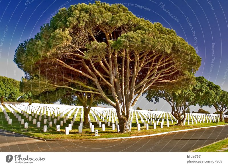 Sky White Tree Green Blue Calm Loneliness USA Branch Row Tree trunk Beautiful weather Memory Cemetery Grave Peaceful