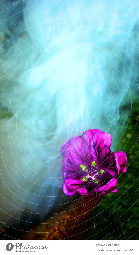 Green Beautiful Flower Dark Grass Sadness Air Pink Fog Blaze Action Fire Threat Smoking Violet Mysterious