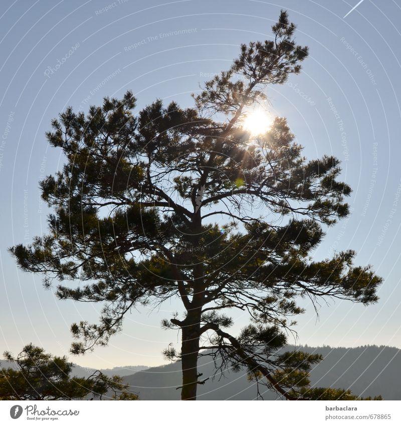 Bye, dear Anne! And many sunny days Nature Landscape Elements Sky Sun Beautiful weather Tree Pine Hill Swabian Jura Illuminate Free Bright Warmth Wild Moody