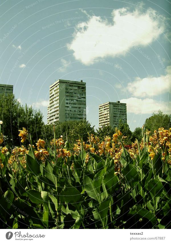 Flower House (Residential Structure) Sadness Park High-rise Gloomy Derelict GDR Shabby East Prefab construction Bulgaria