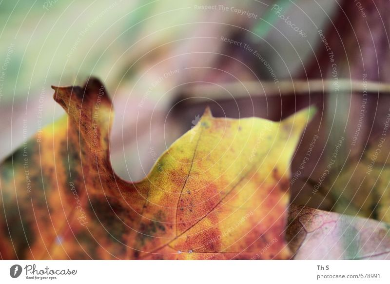 Nature Beautiful Colour Plant Leaf Environment Autumn Natural Elegant Esthetic Serene Harmonious Faded
