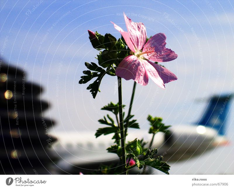flowery airfield Runway Airplane Covers (Construction) Flower luxurious position light positionlight