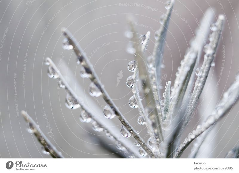 """pearl necklace Plant Air Drops of water Summer Bushes Pot plant Garden Fresh Cold Wet Clean Blue Gray White Thirst Contentment Nature Environment """"Morning dew,"""""""