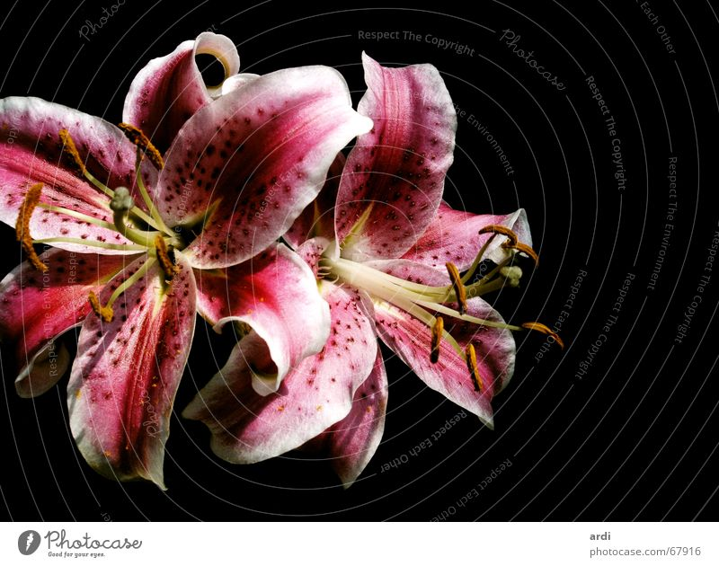 Nature Beautiful Flower Plant Emotions Blossom Delicate Blossoming Bouquet Seed Lily Fragile Caresses Lovely Scythe