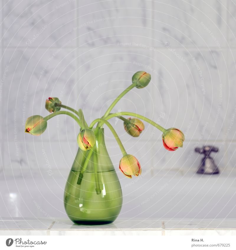 in the bath Living or residing Bathtub Bathroom Tulip Blossoming Yellow Gray Green Bud glass vase Vase Tap Tile Colour photo Interior shot Deserted