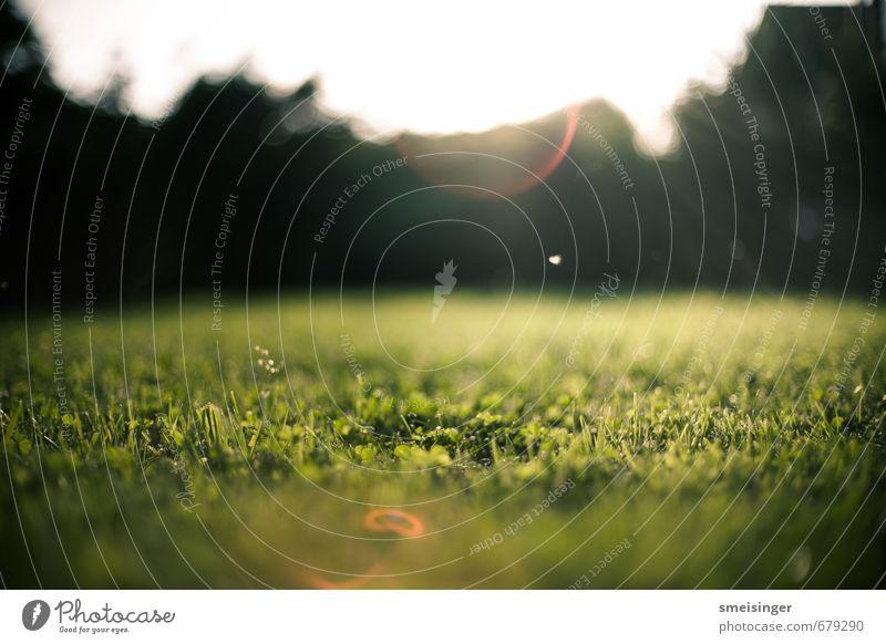 Garten Sonne Nature Green Grass Brown Garden Park Idyll Bushes Europe Soft Lawn Peace Serene Fairy