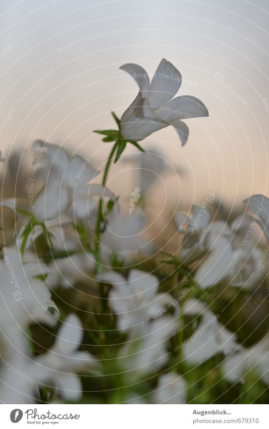 florid Flower Blossom Emotions Contentment Success Beautiful Goodness Caution Life Wisdom Purity Hope Wanderlust Attachment Evening Twilight Sunrise Sunset