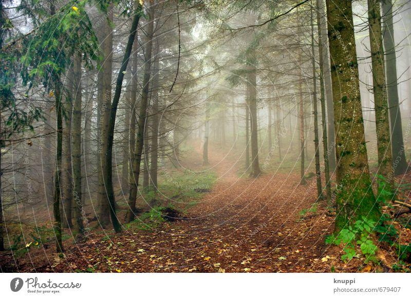 Nature Green Plant Summer Tree Landscape Leaf Forest Environment Autumn Lanes & trails Natural Brown Air Orange Fog