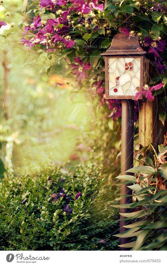 summer secret Nature Plant Summer Bushes Leaf Blossom Foliage plant Garden Natural Brown Green Violet Peaceful Serene Relaxation Lantern Colour photo
