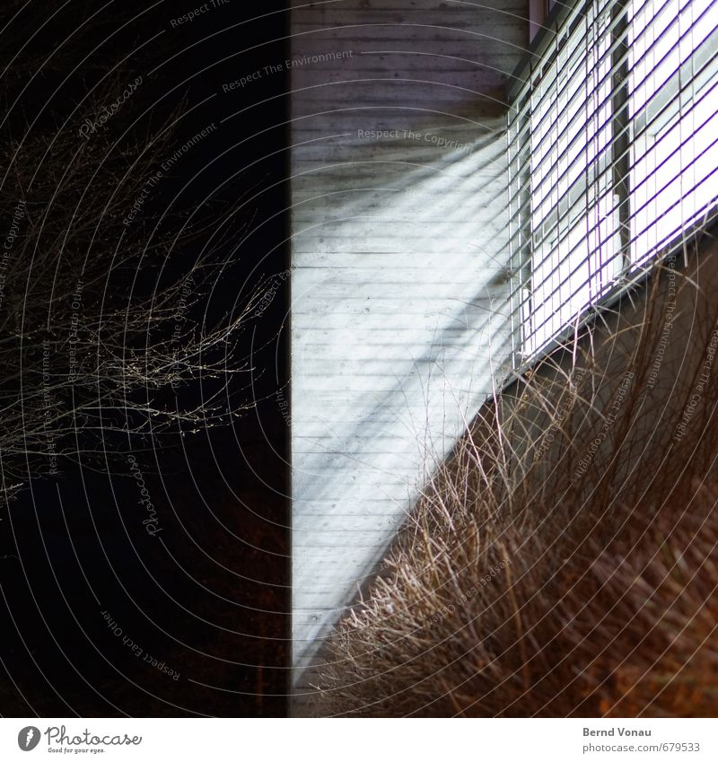Seems so Bushes Building Window Concrete Stripe Dark Bright Gray Green Black White Gymnasium Venetian blinds Tilt Colour photo Exterior shot Deserted