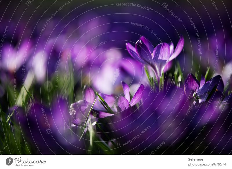 Nature Plant Flower Landscape Environment Meadow Grass Spring Blossom Small Garden Park Blossoming Violet Near Sustainability