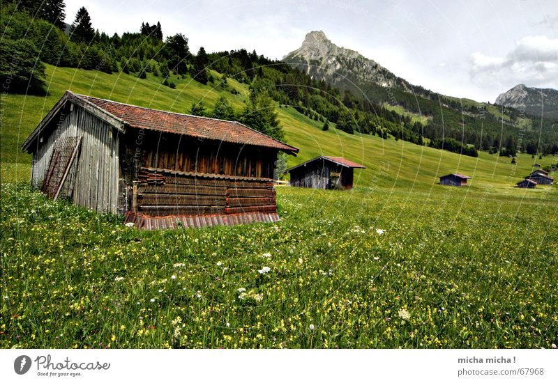 Cabin tour I Meadow Summer Forest Clouds Peak Flower meadow Calm Vacation & Travel Relaxation Green Hut Mountain Weather