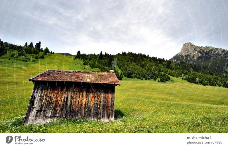 Flower Green Summer Vacation & Travel Calm Clouds Forest Relaxation Meadow Mountain Weather Peak Hut Flower meadow