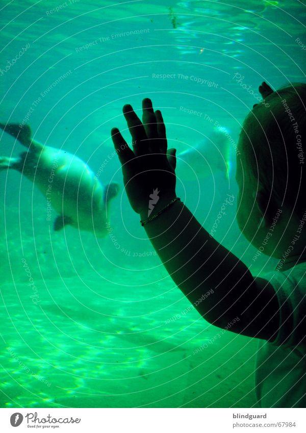 Child Water Sun Joy Animal Waves Swimming & Bathing Stand Observe Dive Zoo Toddler Frankfurt Window pane Captured Marvel