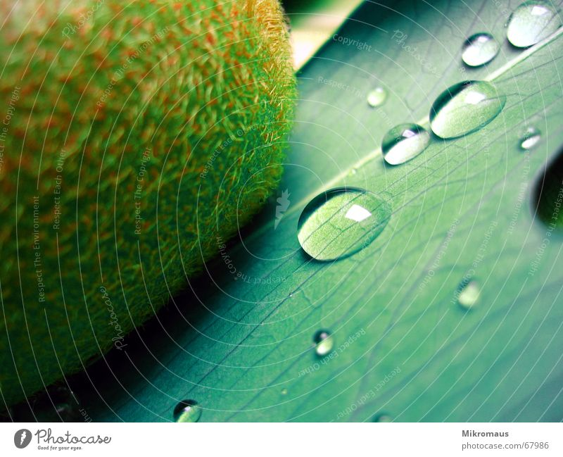 Plant Green Water Healthy Food Rain Fruit Nutrition Drops of water Drinking water Wet Wellness Vessel Rachis Tears