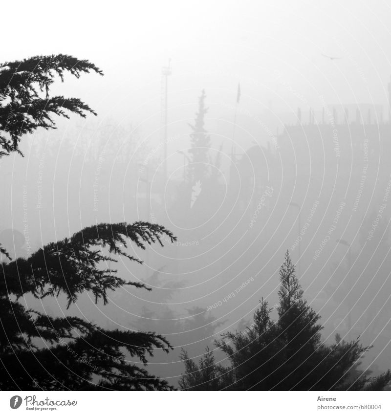 Weather | low visibility Environment Air Fog Tree Coniferous trees Threat Gray Black White Calm Loneliness Stagnating Insecure Disorientated Washed out Blur