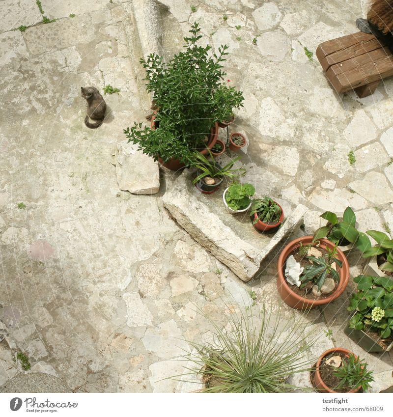 Flower Plant Summer Joy Vacation & Travel Relaxation Garden Cat Sit Bench Backyard