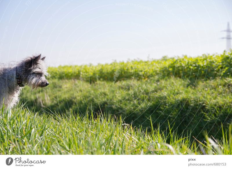 Dog Nature Blue Green Plant Sun Animal Meadow Grass Gray Field Wait Stand Beautiful weather Trip Observe