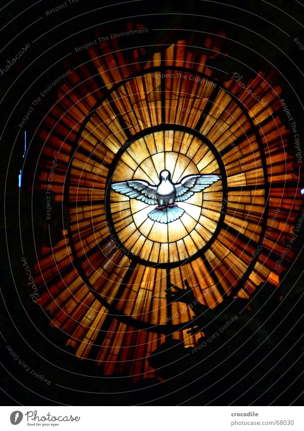 Lighting Glass Flying Round Peace Vatican Symbols and metaphors Pigeon Rome Catholicism St. Peter's Cathedral