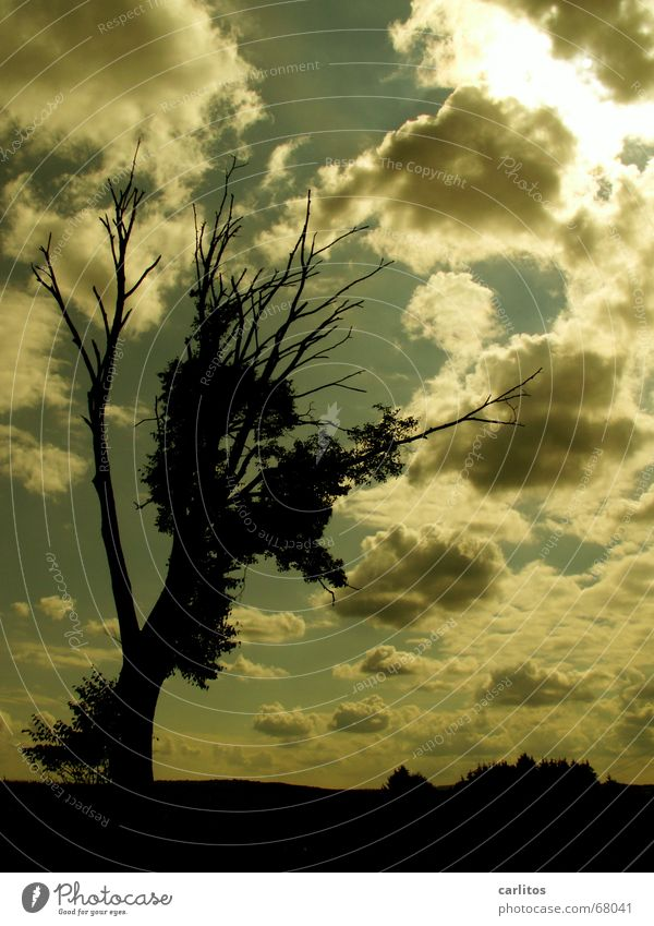 Sky Tree Clouds Dark Death Sadness Grief Symbiosis