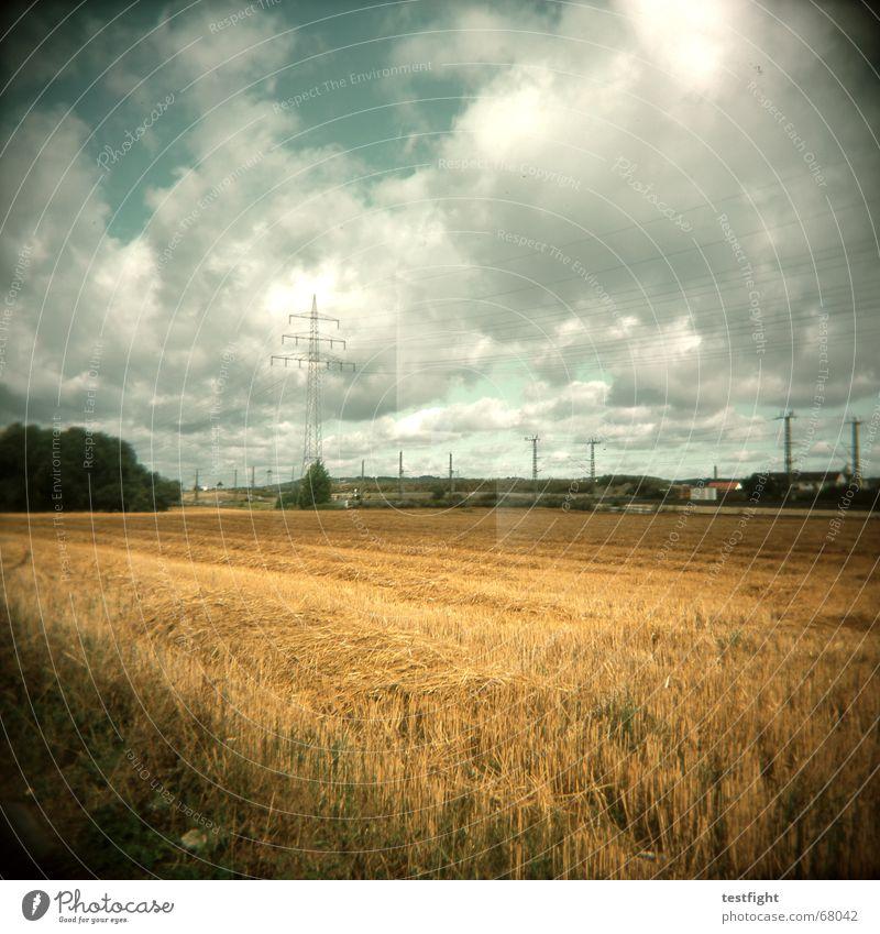 Landscape Rye Wheatfield Grain