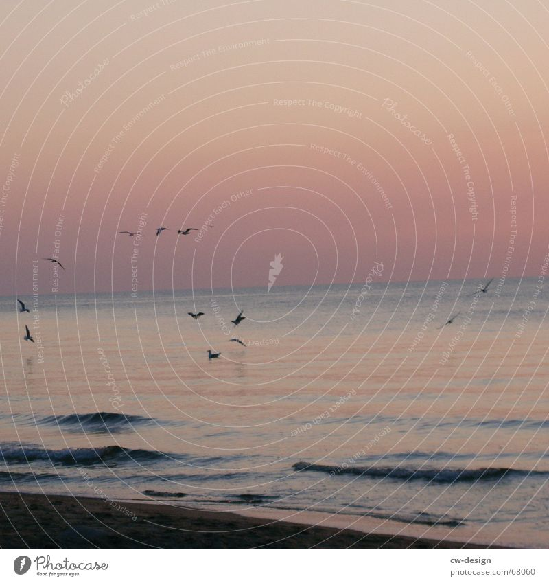 Sky Nature Water Summer Plant Sun Ocean Beach Animal Calm Landscape Far-off places Coast Sand Lake Air