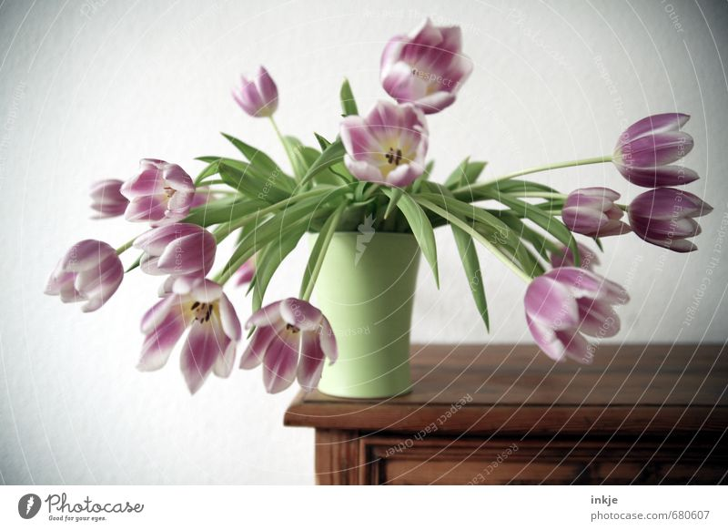 Beautiful Green Flower Life Emotions Style Pink Leisure and hobbies Lifestyle Living or residing Decoration Blossoming Bouquet Hang Edge Tulip