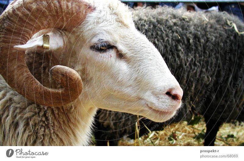 Animal Cute Sheep Antlers Straw Goats Buck Billy goat Earpiece