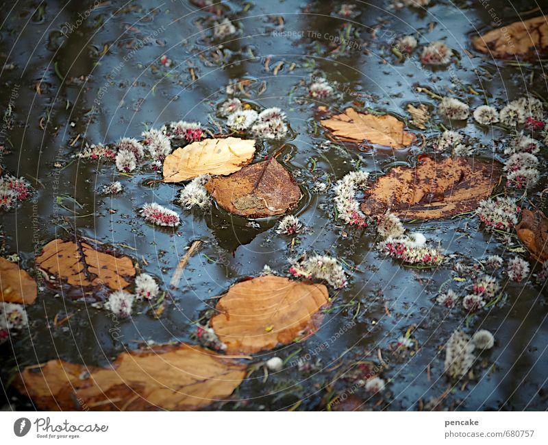 seasons Environment Nature Plant Elements Water Spring Autumn Climate Climate change Leaf Blossom Bog Marsh Lake Sign Dirty Fragrance Dark Cold Warmth Wild Blue