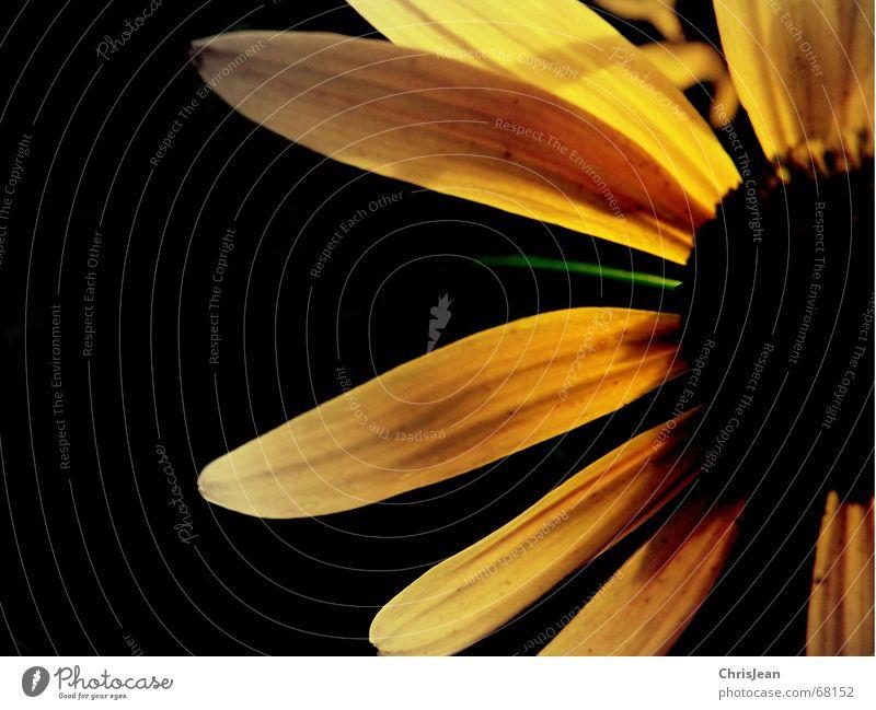 Nature Flower Plant Summer Black Yellow Colour Life Autumn Jump Blossom Spring Near Stalk Lust Still Life