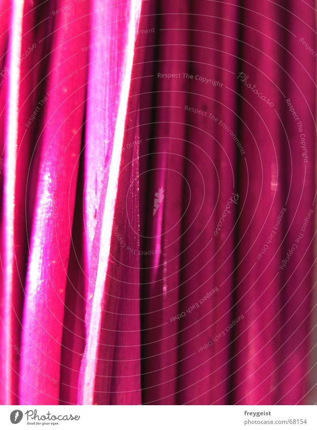pink wood Pink Wood flour Bundle String Style Stalk Vertical Gaudy Intensive Pasture Nature Iron-pipe Macro (Extreme close-up) Colour high Tall Multicoloured
