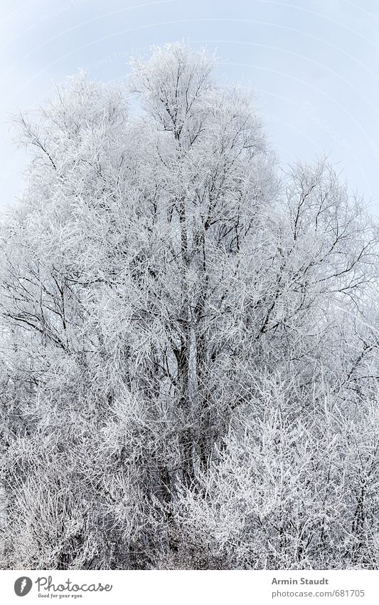 Sky Nature White Tree Calm Winter Cold Forest Environment Snow Natural Moody Fresh Beautiful weather