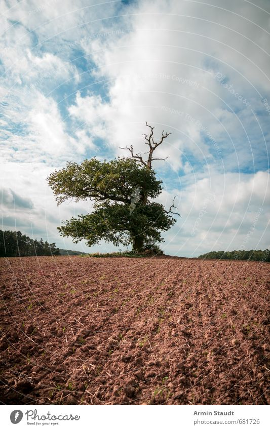 Thousand-year-old oak tree on a field Hiking Nature Landscape Earth Sky Spring Beautiful weather Wind Tree Oak tree Field Old Dark Far-off places Large Historic