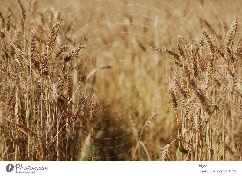 Yellow Lanes & trails Empty Grain Grain Gap Variable