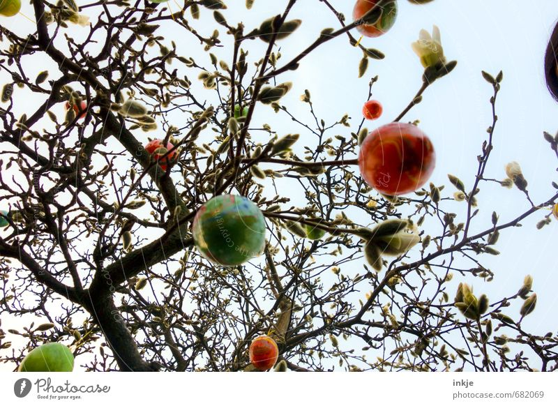 Sky Nature Beautiful Tree Emotions Spring Style Leisure and hobbies Lifestyle Bushes Decoration Tall Round Easter Hang Trade