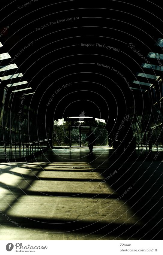 always straightforward Tunnel Tunnel vision Light Sunbeam Wood Going Physics Pattern Bridge Woodway Warmth lines Line
